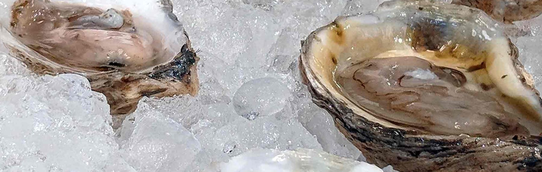 Portland Maine Oysters